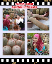 CACTUS POINT CAMERON HIGHLANDS