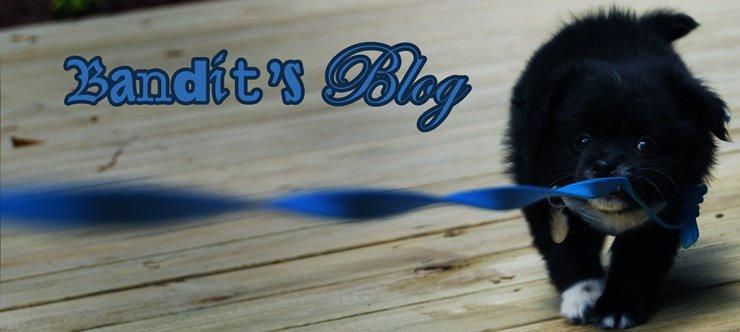 Bandit's Blog