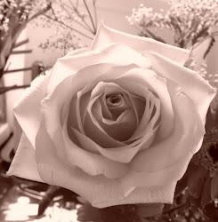 ROSE DE MON AMOUR