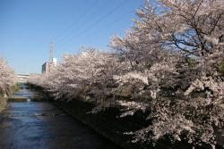 Orang Demak berbudaya Japan