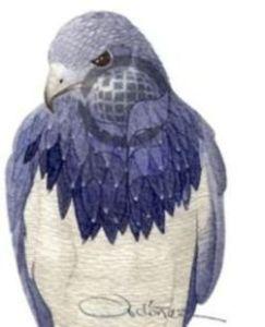 Aguila Paramuna