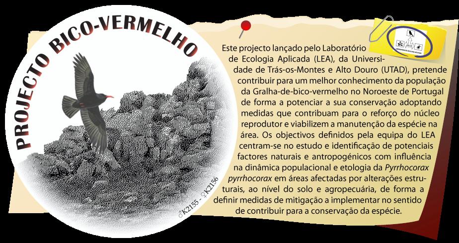 Projecto Bico-vermelho