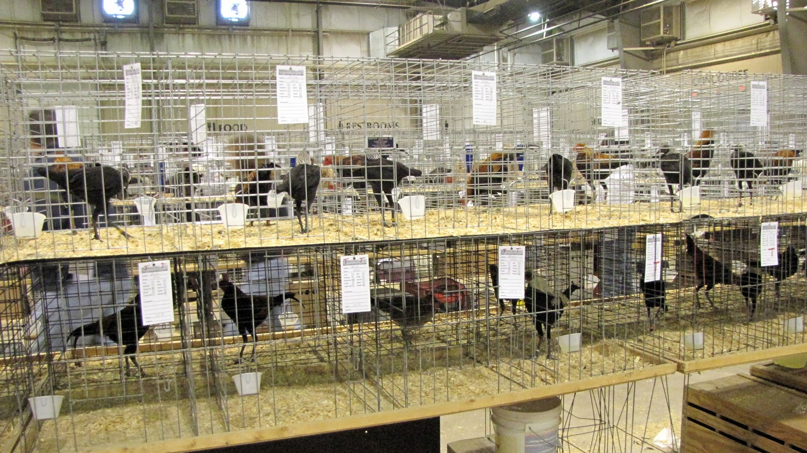 Tales from the Coop Keeper: National Poultry Show and ...