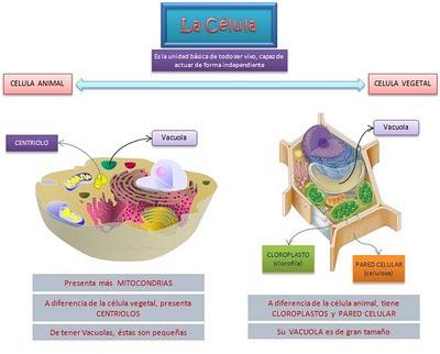 Diferencias entre sistole y diastole yahoo dating 3