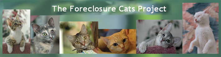 The Foreclosure Cats Project