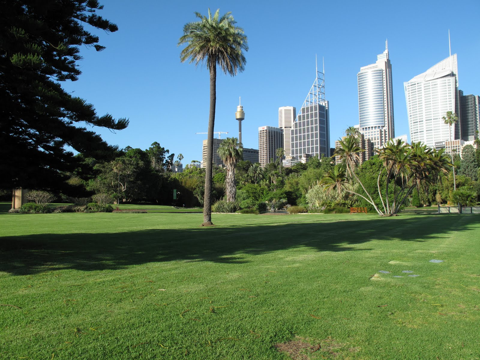 City Skyline From Gardens