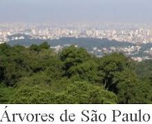 Blog Árvores de São Paulo