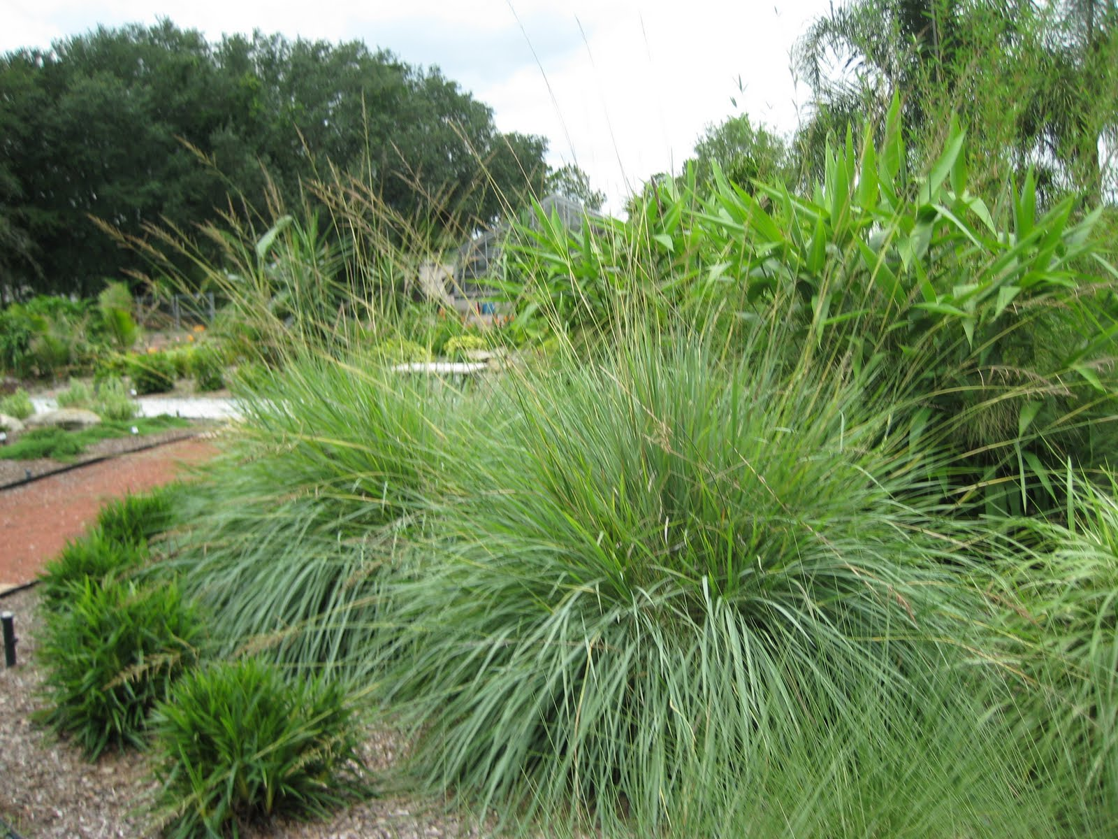 Uf ifas extension polk gardening ten plants that beat for Small landscape grasses