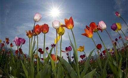 La casa llena de mrs sunshine la fiesta del tulip n for Bilder fur wohnzimmer blumen