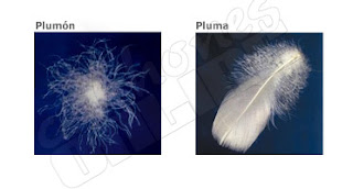 EDREDONES DE PLUMA Y PLUMON FEATHER DUVET by dormitorios.blogspot.com EDREDONES DE PLUMON
