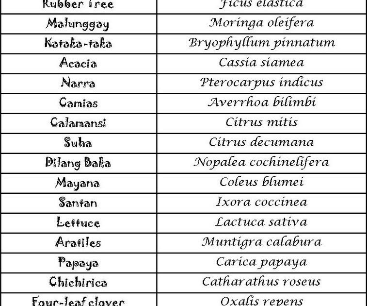 plant and scientific names Science writing and editing: how to write scientific names the latin scientific name of a species, be it plant, animal, bacterium, fungus, etc, is a two-part name consisting of the genus name first (by the way: one genus, two genera) and the species name second.