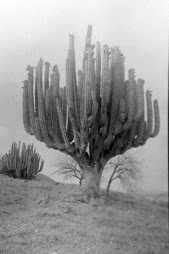 Las Floras de México