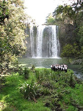 The great Whangarei Falls!