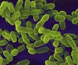 Pembuktian Riset Propolis Sembuhkan TBC