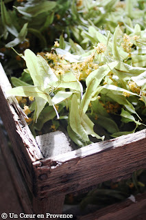 Linden flowers in old crates