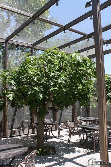 Grande moustiquaire du restaurant La Chassagnette