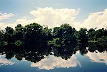 Reflexos no Rio Negro