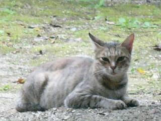 岡山城の猫