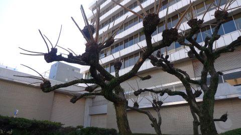 角の生えた木