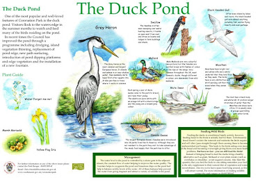 Coronation Park, Duck Pond Interpretation