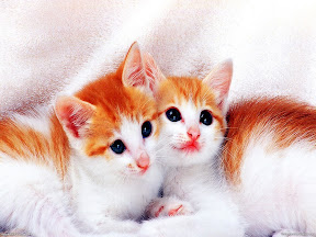 Cute Cats | nature desktop wallpapers Images Photos