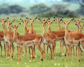 Deers | nature desktop wallpapers Images Photos