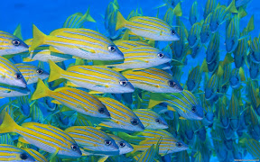 Underwater Widescreen | nature desktop wallpapers Images Photos