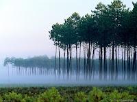 Forests HD Desktop Wallpaper