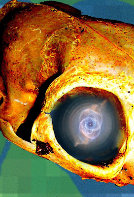 Cat skull with cat's eye nebula