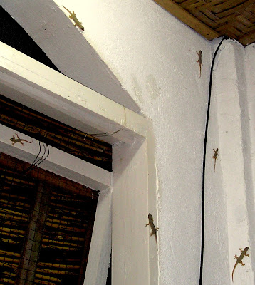 Gecko Corner, just above the righthand side of my Siargao Island 'home office'