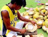 Lugit man shelling coconuts  Siargao Island, NE Mindanao, Philippines
