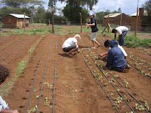 KENYA: Weeded and now planted.