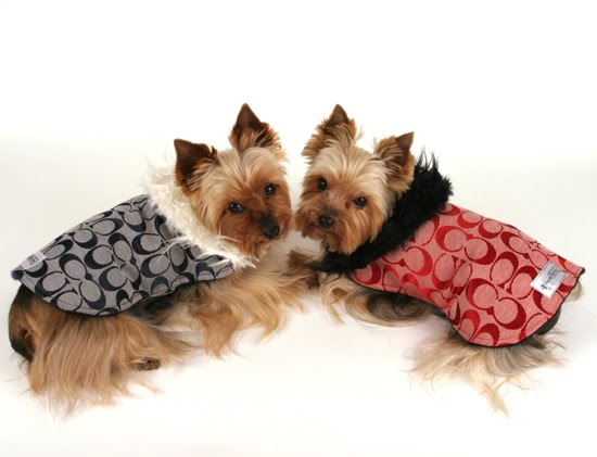 Miniature Yorkshire Terrier WINTER PET CARE