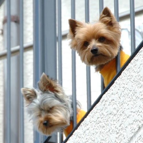 Best Neighbor Barking Dog Deturrent