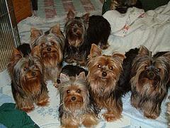 Puppy Scam Dog Dies Non Refundable Deposit