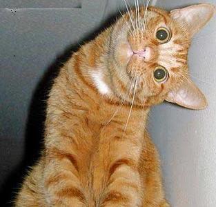 http://4.bp.blogspot.com/_KlpiDpCZZ2U/TK5JMQAeGLI/AAAAAAAAATw/jf0Ytd5SZAg/s320/gato_curioso.jpg