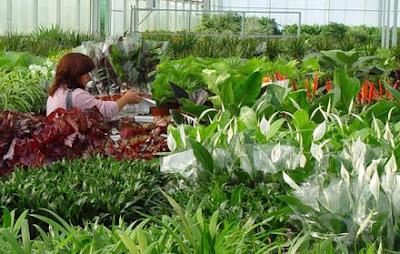 Vivero el guadual plantas ornamentales for 6 plantas ornamentales