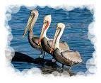 Pelican Trinity