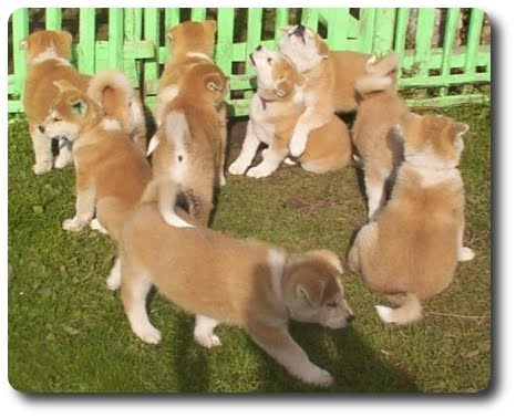 Top Dog Directory