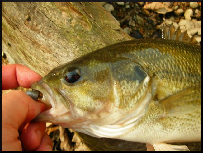Smallmouth in your soup beautiful fall day fishing in indiana for Fish in indiana