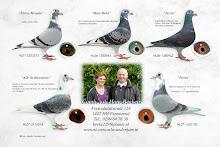 Onze duiven