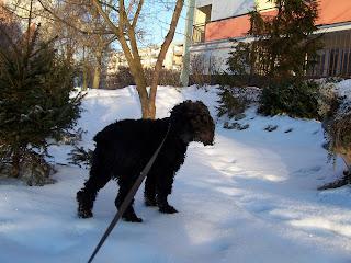 Mika na spacerze