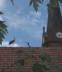 Un cigogneau apprenant à voler
