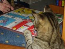 Fem una partideta????  Foto enviada per la Noli de la seva gata Fernanda.