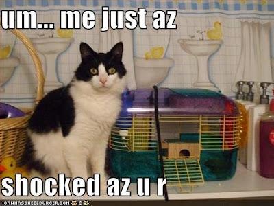 lol cat shocked