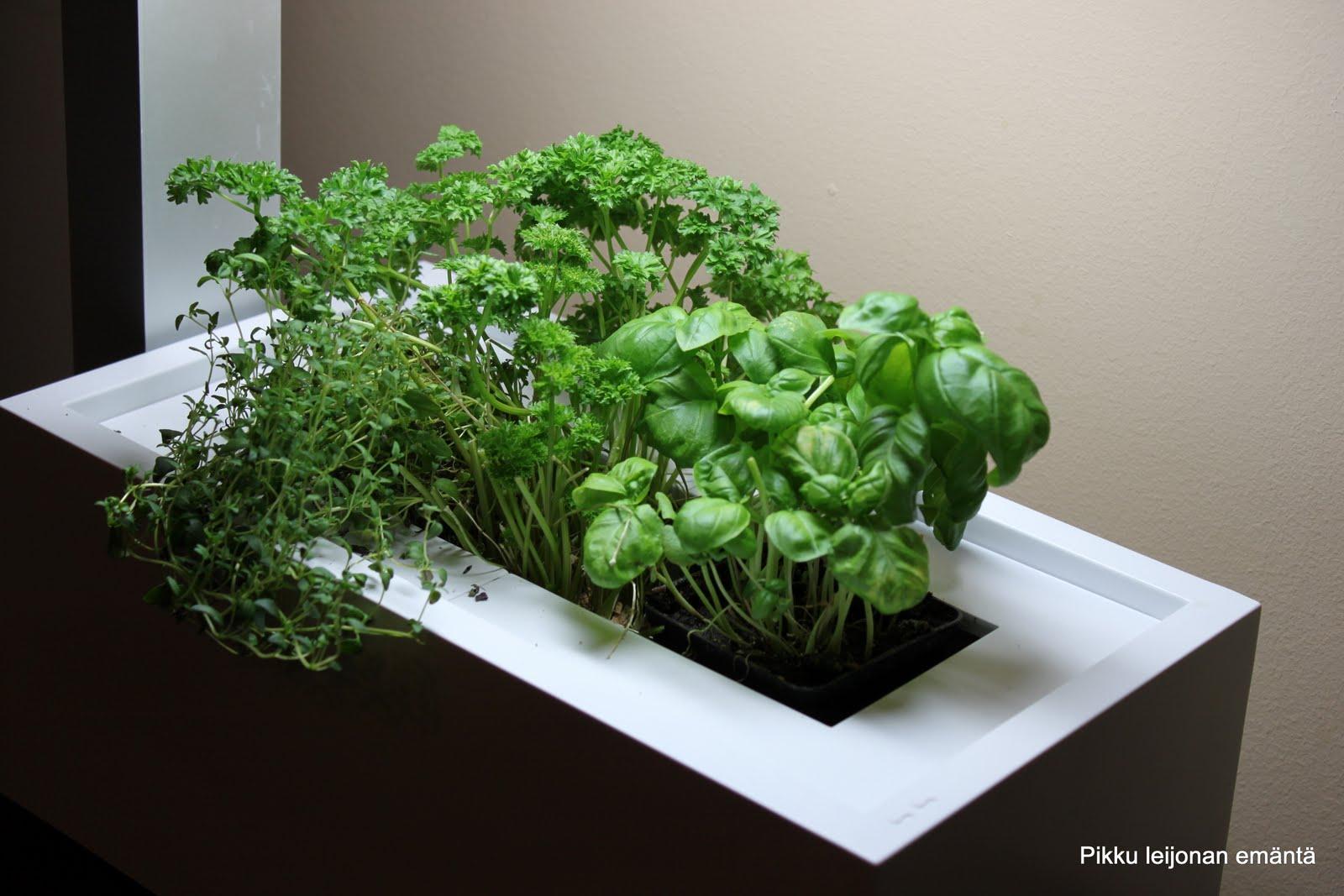 herbie indoor garden