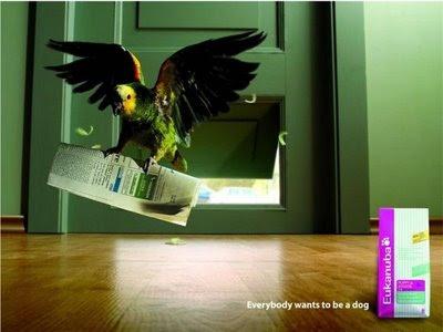 Eukanuba weird ad