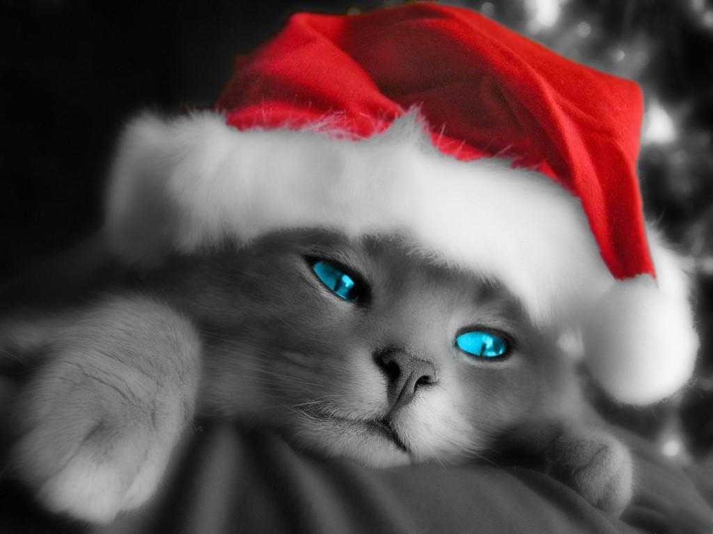 Cute animals with Santa hats and Christmas-themed animal wallpapers.