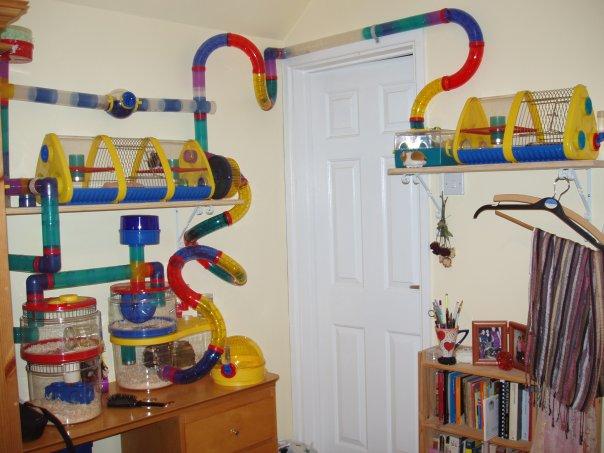 Что можно сделать для хомяка своими руками игрушку