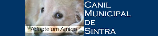Canil Municipal de Sintra/Cães